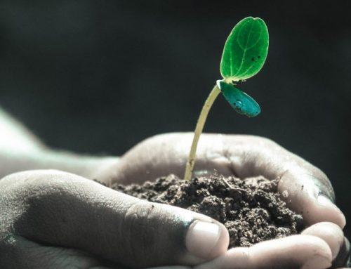 Y la tierra… les dio sus frutos (Homenaje a los Agricultores)